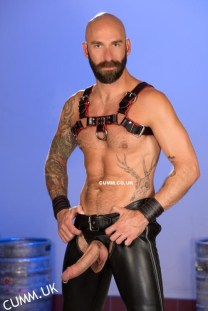 leather daddy horse hung