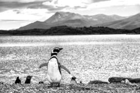 patagonia05
