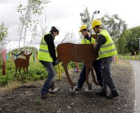 Cuningar Loop, Dalmarnock 31.7.15 Pic Shows: Artist Rob Mulholland installing his deer sculpture at Cuningar Loop with his community volunteers Stephen Milligan (22, glasses) and Robert Kennedy (29, grey top). This is the first of his three sculptures that are being installed at the site. Rob has taught community volunteers how to weld materials and they have spent three months crafting the steel structure. More info from: Emily Liddle at Golley Slater PR - 07921687626 Julie Gracie at Golley Slater PR eliddle@golleyslater.co.uk JGracie@golleyslater.co.uk 0131 220 8787 | 0141 204 7800 | 07814 487663 Golley Slater Scotland, 3 Queen Street, Edinburgh, EH2 1JE / 38 Queen Street, Glasgow, G1 3DX. www.golleyslater.com Picture Copyright: Iain McLean, 79 Earlspark Avenue, Glasgow G43 2HE 07901 604 365 photomclean@googlemail.com www.iainmclean.com All Rights Reserved Strictly No Syndication.