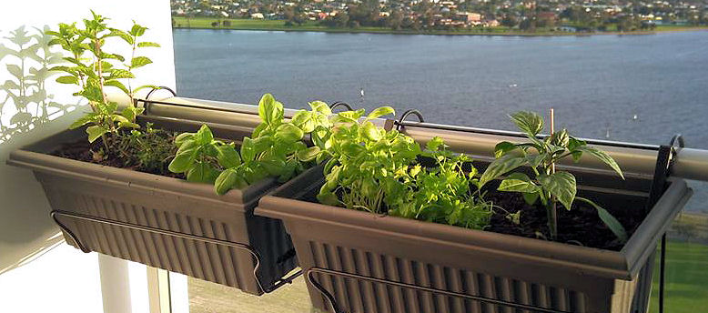 My little balcony herb garden