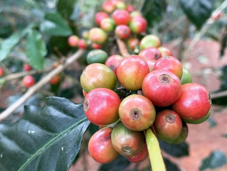 Bugkalot Coffee Company Coffee Beans