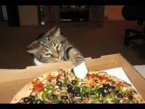 pisica-care-fura-pizza