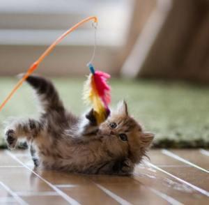 pisica-care-se-joaca