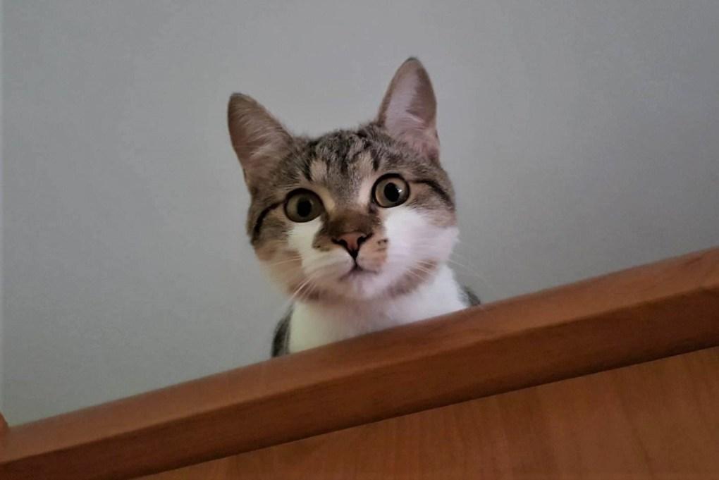 pisicuta care vorbeste