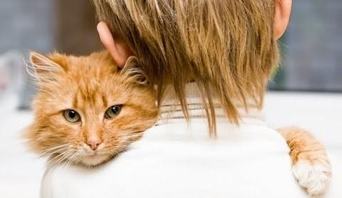 motive pentru care ar trebui sa ai o pisica