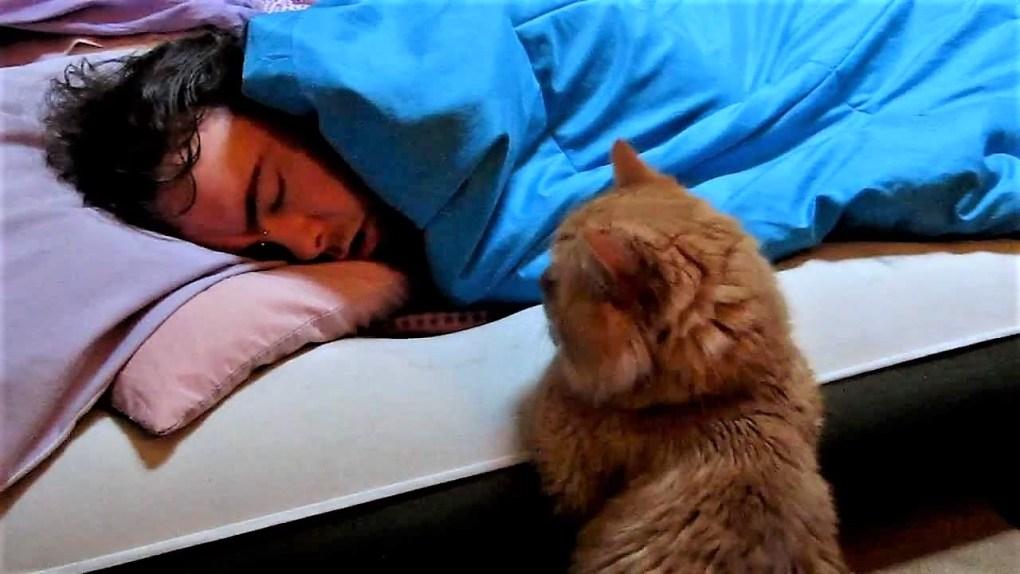 Cum sa iti educi pisica sa te lase sa dormi noaptea