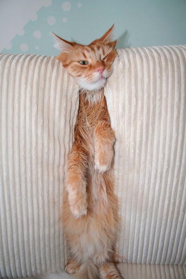 pisica_haioasa_blocata_pe_Canapea