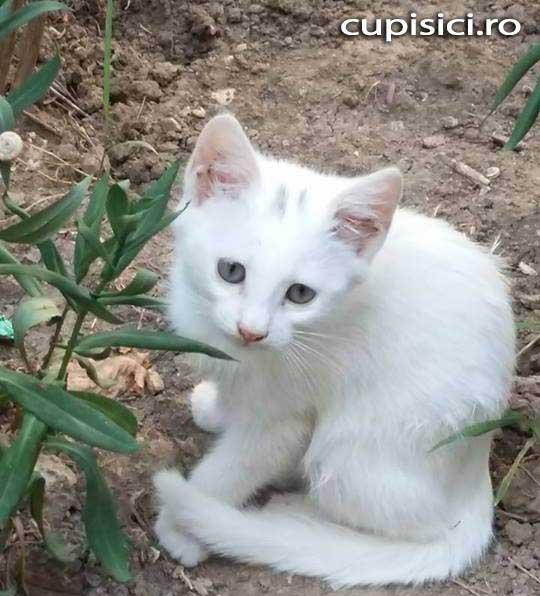 adopti o pisica de pe strada