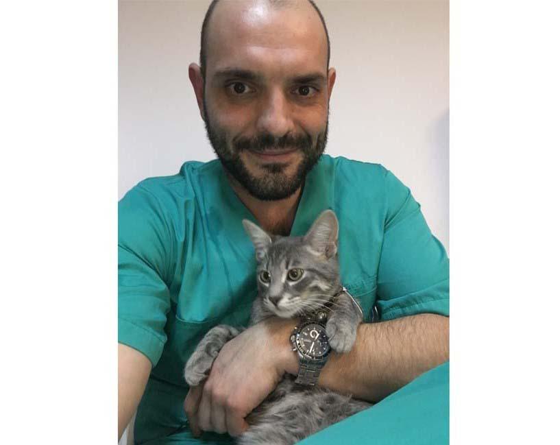 sterilizarea la pisici