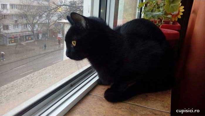 superstitii despre pisici