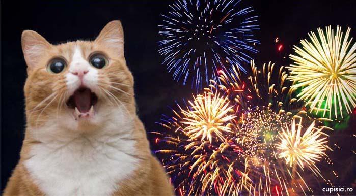 sa iti protejezi pisica de sunetul artificiilor