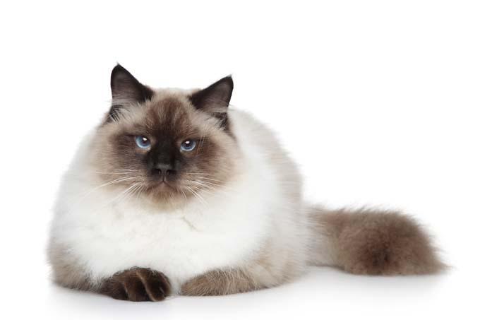 pisica ideala pentru zodia ta