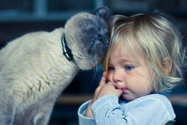 rase de pisici pentru copii