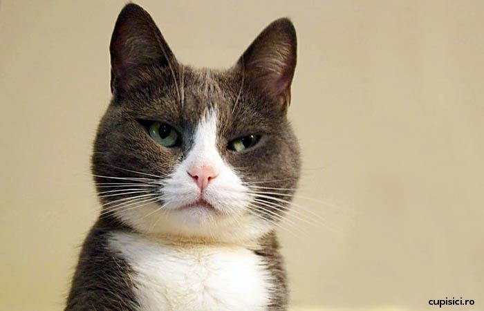 lucruri pe care le fac oamenii, dar pisicile le urasc