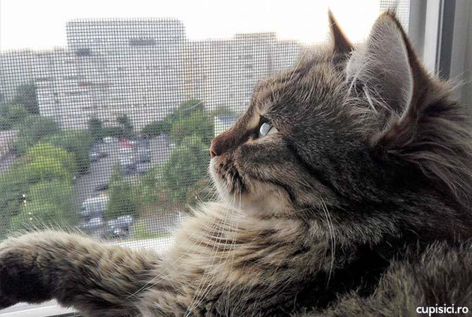 pisicilor le place sa stea la fereastra