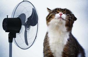 iti protejezi pisica de canicula