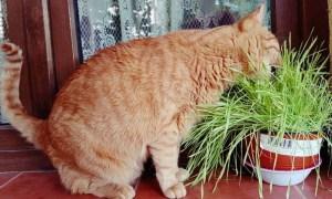 plante sanatoase pentru pisici