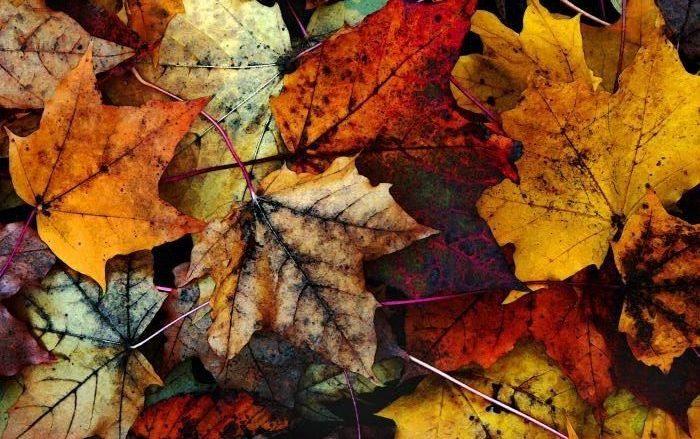 1 ottobre: la playlist per gli amanti dell'autunno