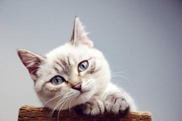gatti-come-comunicare