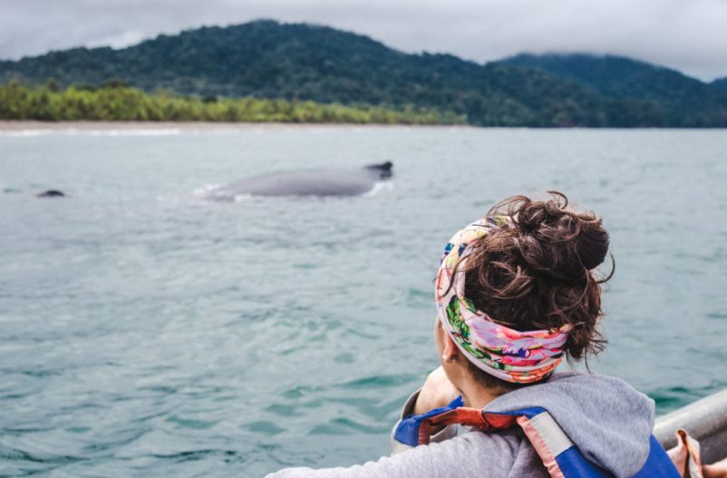 tour humpback whale El valle bahia solano chocó colombia whale-watching wild ethical