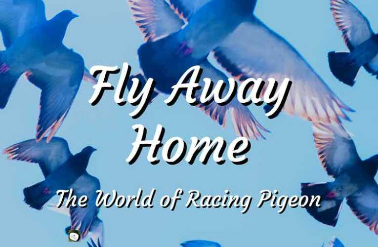 Fly Away Home: Racing Pigeon and the People Who Race and Home Them