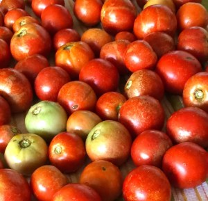 How to Grow World Class Tomatoes 2