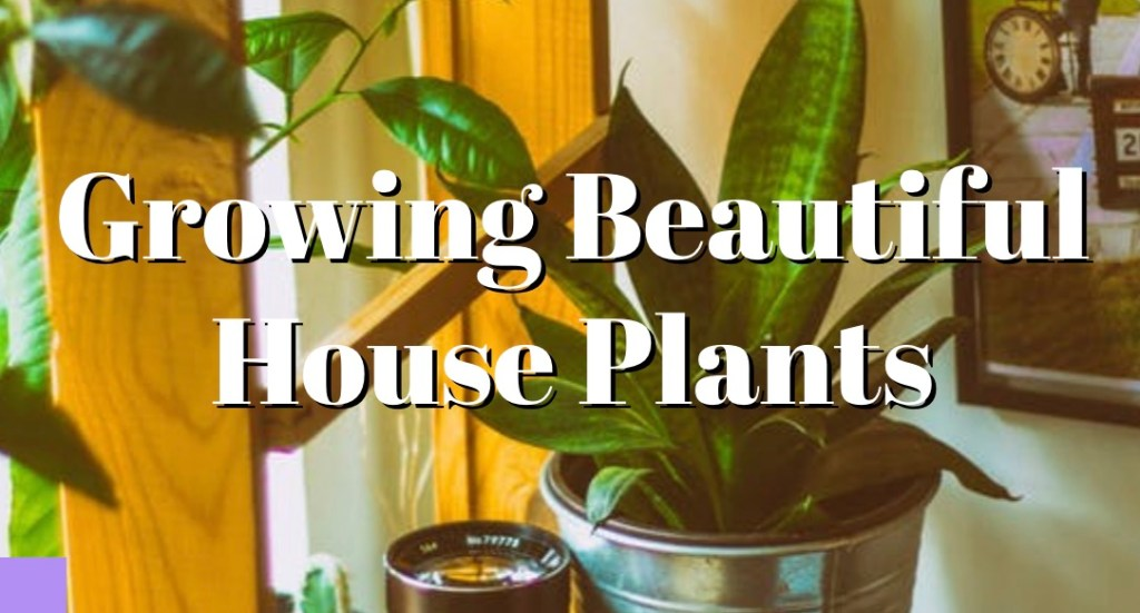 Growing Beautiful House Plants 1