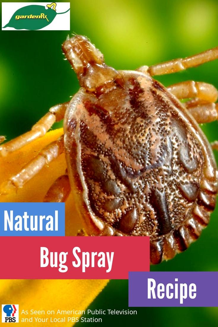 bug spray title card