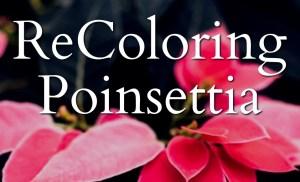ReColoring Poinsettia 2