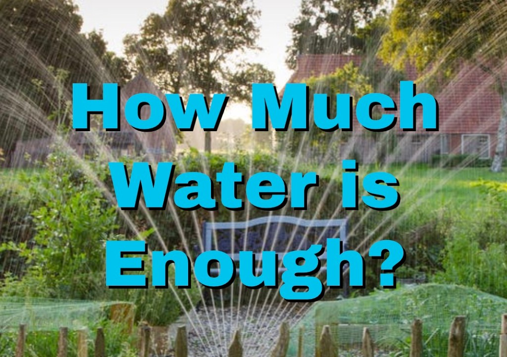 How Much Water is Enough? 1