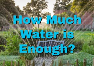 How Much Water is Enough? 2