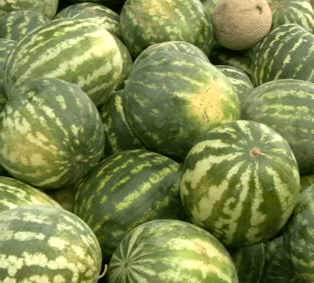 GardenRx: How to Tell if Your Watermelon is Ripe 1