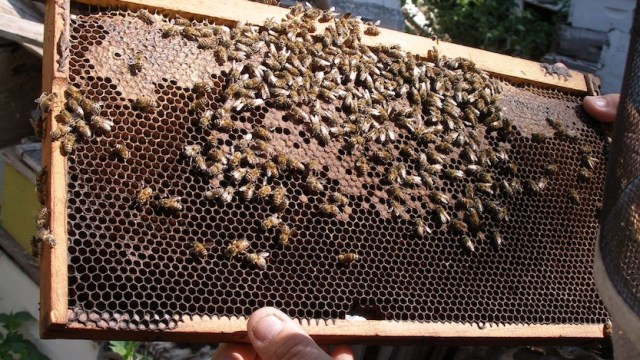 Honey Bees and Honey 2