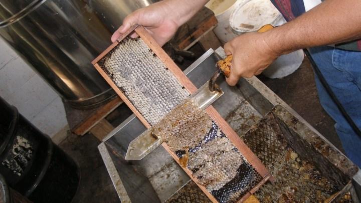 Honey Bees and Honey 8