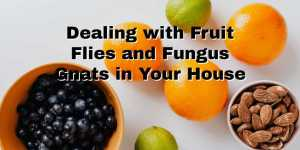 dealing with fruit fries