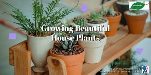 growing beautiful house plants