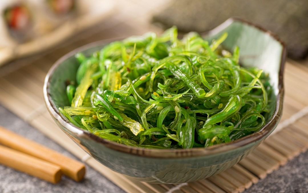 Rumput Laut Tumbuhan Sejuta Manfaat Dalam Kehidupan Sehari-hari