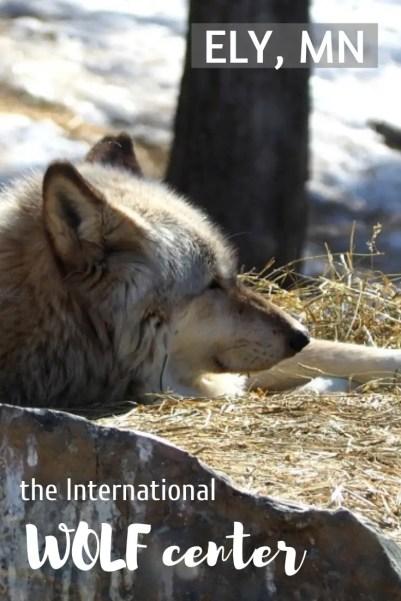 International Wolf Center in Ely, Minnesota