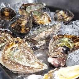 Viaje Oyster Bar, Rosarito, Baja California