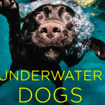 Underwater Dogs Seth Casteel Book – Hardcover  $12.04