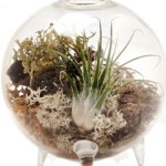 Got Curiosity? A Chic Glass Terrarium Vase For Under $15