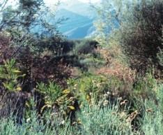 Deer Creek-Flowers MS-Mtns in bg-H358px