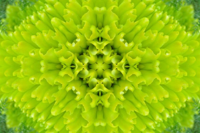 Nourishing All Aspects: Are You Looking for a Kaleidoscopic Approach?