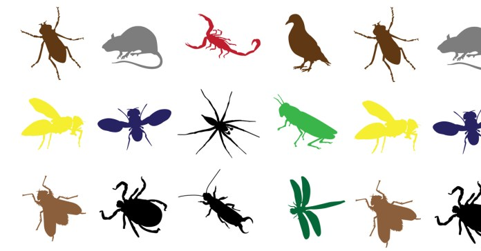 Safe and Natural ways to Control Pests Around Your Home