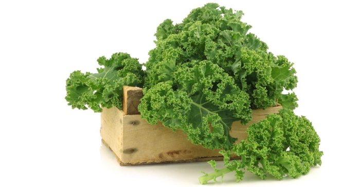 16 Healthy Reasons to make Kale a part of your everyday diet