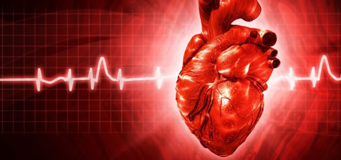 The Truth About Heart Disease Part II: Endothelial Dysfunction and Oxidative Stress.