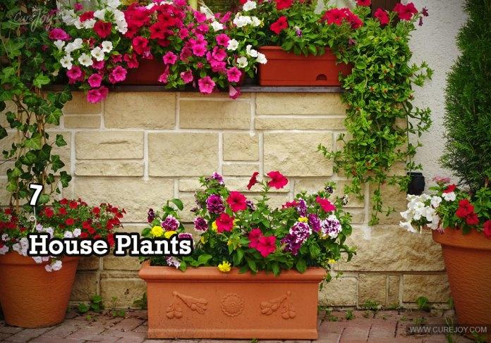 7-house-plants
