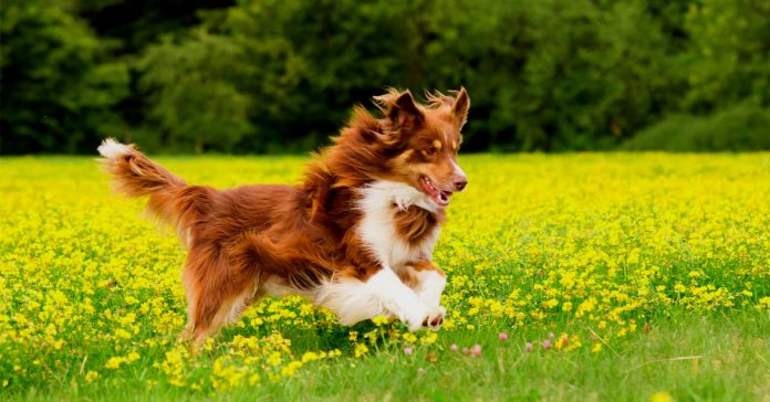 Natural Raw Food For Dogs Do's And Dont's