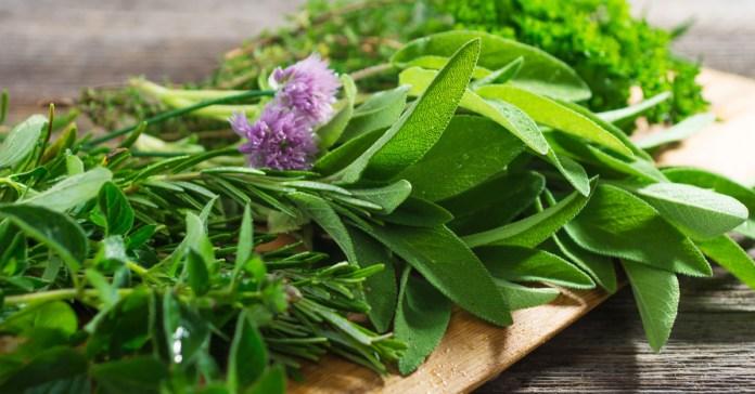 5 Ayurvedic Herbs To Purify Blood