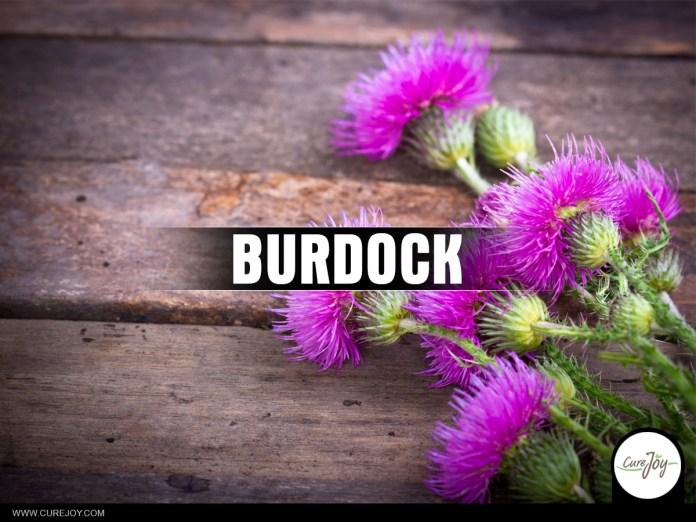23-Burdock